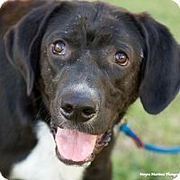 Adopt A Pet :: Owen - Huntsville, AL