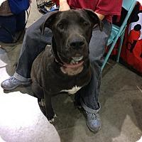 Adopt A Pet :: Cyclone - Reno, NV