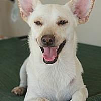 Adopt A Pet :: Giorgio - Buckeye, AZ