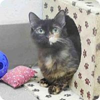 Adopt A Pet :: MISTY - McKinleyville, CA