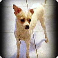 Adopt A Pet :: Twiggy - Tijeras, NM