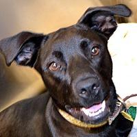 Adopt A Pet :: Summer - Independence, MO