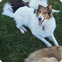 Adopt A Pet :: Penny - Trabuco Canyon, CA