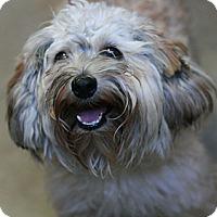 Adopt A Pet :: Heather - Canoga Park, CA