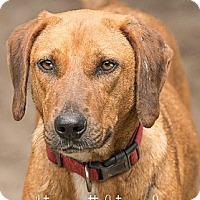 Hound (Unknown Type) Dog for adoption in Havana, Florida - Liz