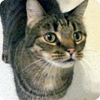 Adopt A Pet :: Tobias - Mountain Center, CA