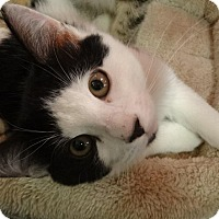 Adopt A Pet :: GIMICK - Diamond Bar, CA