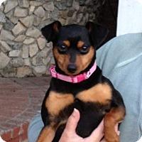 Adopt A Pet :: Duchess - Oceanside, CA
