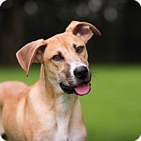 Adopt A Pet :: Brock - Austin, TX