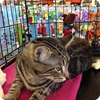 Adopt A Pet :: Teddy - Alamo, CA