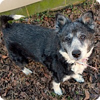 Adopt A Pet :: Fay ~Sponsored~ - Youngsville, NC