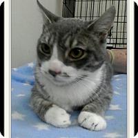 Adopt A Pet :: Morton - Trevose, PA