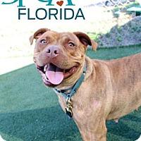 Adopt A Pet :: Esmeralda - Lakeland, FL
