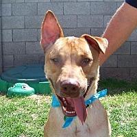 Adopt A Pet :: Mason - Glendale, AZ