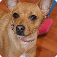 Adopt A Pet :: Pippi - Prosser, WA