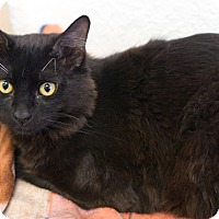 Adopt A Pet :: Luna & Art - Montclair, CA