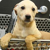 Adopt A Pet :: jillian - Pompton Lakes, NJ
