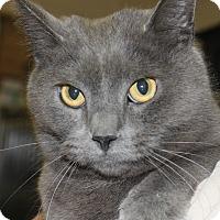 Adopt A Pet :: STORM - Clayton, NJ