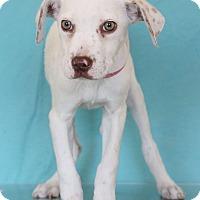 Adopt A Pet :: Pizza - Waldorf, MD