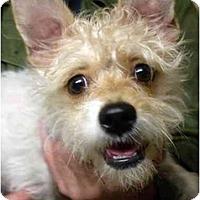 Adopt A Pet :: Tinkerbell - Harrison, AR