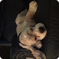 Adopt A Pet :: Riley Joe - Sugarland, TX