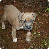 Adopt A Pet :: Lark - Marietta, GA