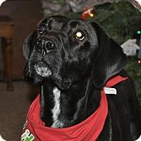 Adopt A Pet :: Sherry - Evergreen, CO
