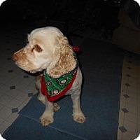 Adopt A Pet :: Buddy -Adopted! - Kannapolis, NC