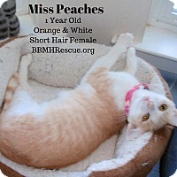 Adopt A Pet :: Miss Peaches - Temecula, CA