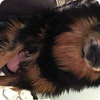 Adopt A Pet :: Darla - Muskegon, MI