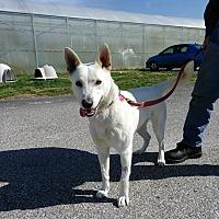 Adopt A Pet :: ARIELLE! - Owenboro, KY