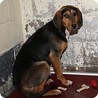Adopt A Pet :: Tiana - Marietta, OH