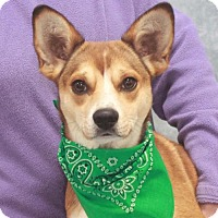 Adopt A Pet :: Nora-PENDING - Garfield Heights, OH