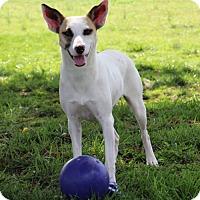 Adopt A Pet :: Dot - Savannah, TN