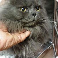 Adopt A Pet :: Chico - DFW Metroplex, TX