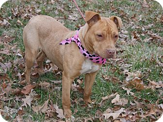 Pit Bull Terrier/Boxer Mix Dog for adoption in Princeton, Kentucky - Pitty Pat