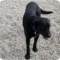 Adopt A Pet :: Barker - Cedar City, UT