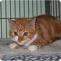 Adopt A Pet :: Suzi - Shelton, WA