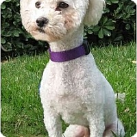 Adopt A Pet :: Snickers - La Costa, CA