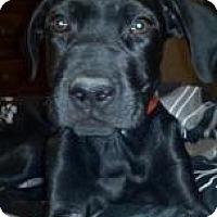 Adopt A Pet :: Chopper - Phoenix, AZ