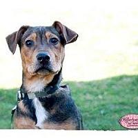 Adopt A Pet :: Zory - Haverhill, MA