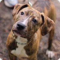 Adopt A Pet :: Clay - Tinton Falls, NJ