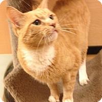 Adopt A Pet :: Solomon - Monroe, GA