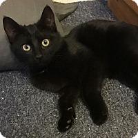 Adopt A Pet :: Tivoli - Reston, VA