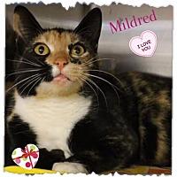 Adopt A Pet :: Mildred - Harrisburg, NC