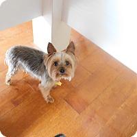 Adopt A Pet :: Precious - West Deptford, NJ
