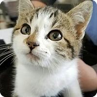 Adopt A Pet :: Randa - Monrovia, CA