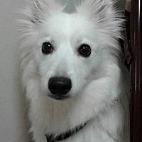 Adopt A Pet :: Bebe of  Cincinnati, Ohio - Lindsey, OH