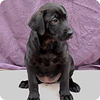 Adopt A Pet :: Aubrey - East Sparta, OH