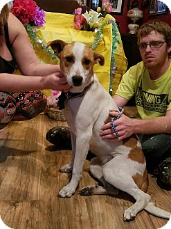 Australian Kelpie/Jack Russell Terrier Mix Dog for adoption in Chiefland, Florida - Minnie